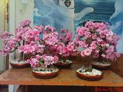 Искусственные деревья бонсай. Сосна,  лиственные,  бисерные