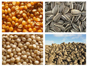 Продаем посевной материал,  семена кукурузы,  подсолнечника,  сорго