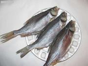 Продам вяленую рыбу по всей Украине