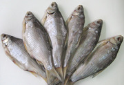 Продаем Рыбу с/м х/к вяленая,  сушеная ОПТ+Розница