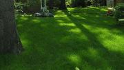 Суміш газонних трав Тіневинослива