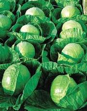 овощи,  фрукты оптом