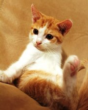 Отдам котёнка в добрые,  заботливые руки!
