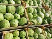 Продажа,  закупка,  импорт,  экспорт овощей,  фруктов,  грецкого ореха