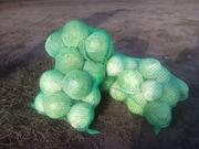 Продам капусту с доставкой на дом в сетках без повреждений м.Полтава