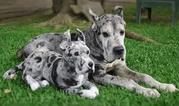 Оригинальные плюшевые  копии  ваших любимых домашних животных!
