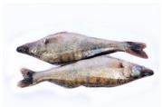 Рыба оптом. Свежемороженая речная рыба.